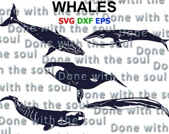 Whales - Whale svg - Fish svg - Humpback whale - Sperm whale - Bowhead whales - Cachalot - Svg eps dxf - Cutting files - Digital cut files