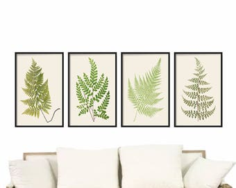 Vintage Ferns Print Set - Botanical Prints - Giclee Art Print - Antique Botanical Prints - Posters - Wall Art - Fern Prints - Vintage Ferns