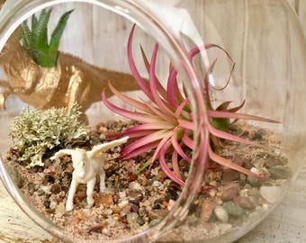 Unicorn Diy Air Plant Terrarium Kit
