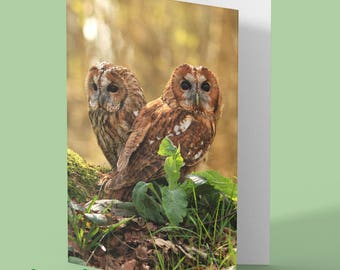 Owl Card - tawny owl - owl photo - bird card - blank greeting card - personalised card - any occasion card - greetings card - nature card