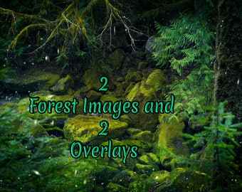 Two Mossy Forest Images