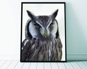 Owl Wall Art Print, Owl Print, Owl Art, Owl Photo, Animal Art, Printable Digital Download, Photography, Animal Print