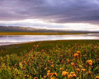 Soda Lake: WALL ART Fine Art Nature Photography Carrizo Plain SoCal Landscape Natural Light Bright Dramatic Color Spring Wildflowers