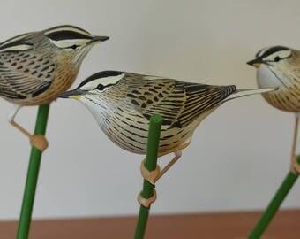 Hand carved Aquatic Warbler - Acrocephalus paludicola - Bird wood carving