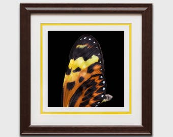 Butterfly wing, butterfly decor, butterfly wing art, bug under glass, yellow, butterfly gift, butterfly print, butterfly wall art
