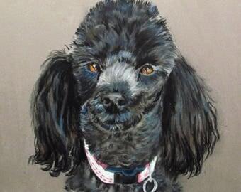 -Little black poodle - dog pet portrait in pastel - animal Art