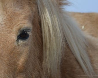Expression - contrast horse / horse expression - Contrast