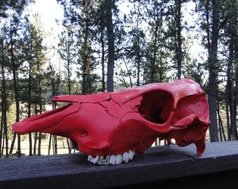 Real Painted Skull / Real Skull / Red Skull / Cow Skull
