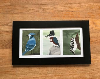Framed Wild Birds
