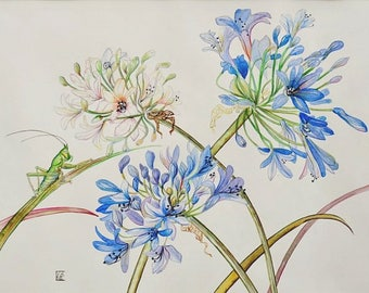 painting contemporary painting modern botanical watercolor agapanthus.