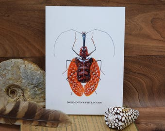 Mormolyce Phyllodes Violin Beetle, Insect,  Coleoptera, natural history blank greeting card By Tabitha McBain