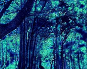 Into the Woods - Digitally Enhanced 8x10 Photo Print