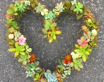 Living Succulent Wreath- Full Heart