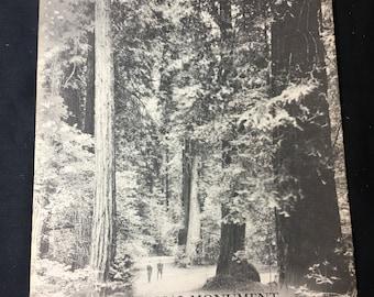 1961 Muir Woods Brochure