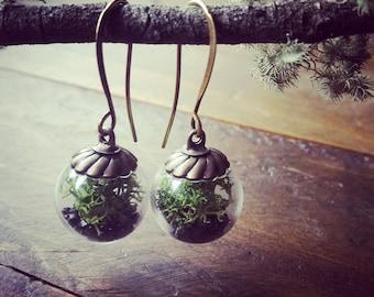 Terrarium Bead Earrings