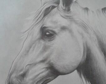 HORSE PORTRAIT hand drawn in pencil