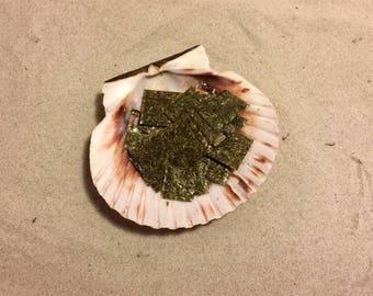 Green Marine Algae ~ Hermit Crab Food