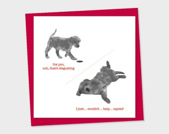 fox poo, black labrador puppy