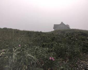 Fog and Flower