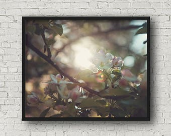 Blooming apple tree fine art photography print, nature photography print, art print, wall art, rustic decor (blooming apple 02)