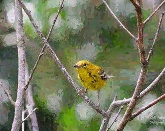 Little Yellow Warbler, Original Canvas Print