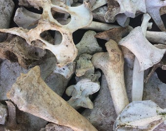 Lot of Miscellaneous Animal Bones (craft grade/nature cleaned)