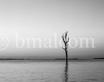 Black and White - Briland - Lone Tree in the Water - Peace and Tranquility - Harbour Island, Bahamas - Lone Tree
