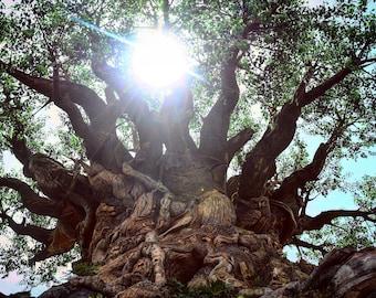 Tree of Life-Animal Kingdom