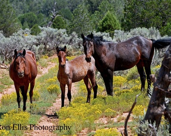 Horse Photography, Equine Photography, Landscape photography, Nature Photography