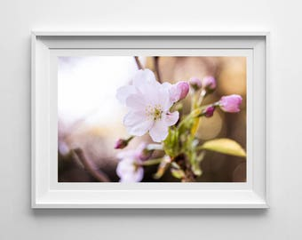 Cherry Blossom, Original Photography Print, Flower, Blossom, Wall Art, Decor