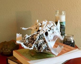 Astoria Deer Museum Skull