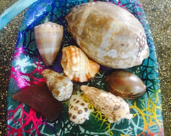 Haleiwa Sea Shells #2