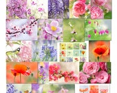 Set of 20 photo postcards flowers, cards, flowers, decoration, paper flower, set of postcards, flower photo cards