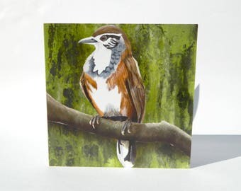Laughingthrush Greetings Card