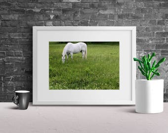 Wall Decor, White Horse, Lush Green Valley