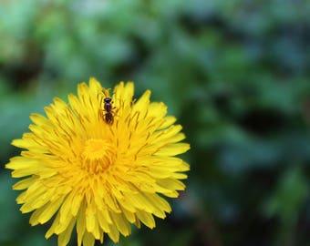 Pollinate - Glossy Photographic Print