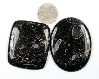 2 Pcs of 216Cts, 59x41mm Natural Turritella Agate Cabochons, Turritella Agate Cabochon wire Wrapping, Jewelry Making  Gemstone, #SKU2461