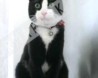 Cat photo | doormariska