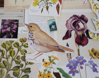 Nature Ephemera Collage Pack #1, 30+ pieces paper pack, Paper ephemera lot, junk journal pack, theme paper lot