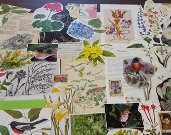 Nature Ephemera Collage Pack #4, 30+ pieces paper pack, Paper ephemera lot, junk journal pack, theme paper lot