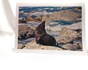 Seal greating card