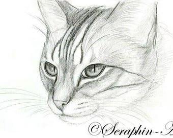 Cat Original Graphite Portrait