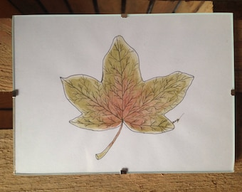 Maple leaf in watercolour and ink.