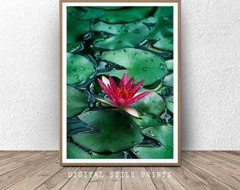 Water lily print, Lily Pads, Landscape Print, Water lillies decor, Water, Waterlily prints, Flower Art, Tropical Print, Home Decor