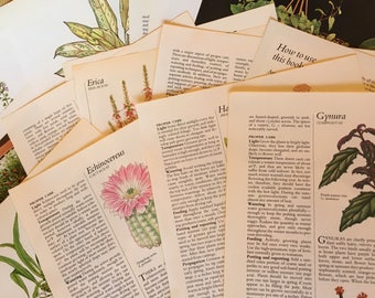 Botanical book pages