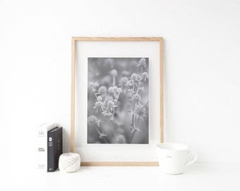 Black and White Flower Photography Print Digital Download
