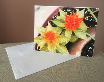 Original Photography - Blank Note Cards