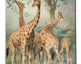 Giraffes Illustration - Fleece Blanket