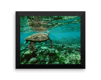 Beautiful Framed Turtle Poster Art