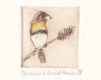 Chestnut Breasted Mannikin, Original Dry Point Etching, Australian Native Bird, Miniprint